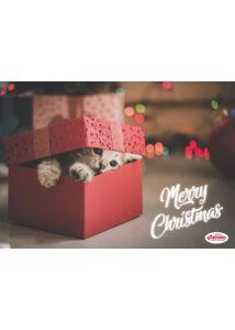 RECORD Karácsonyi Tálalátét Macskás Csúszásgátlós